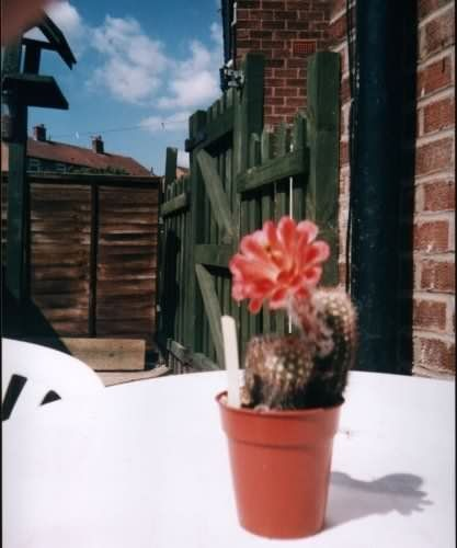 Photograph of SEchinocereus polyacanthus v. huitcholensis used by cactus page of John Olsen and Shirley Olsen